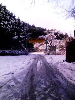 初和田 雪が!!